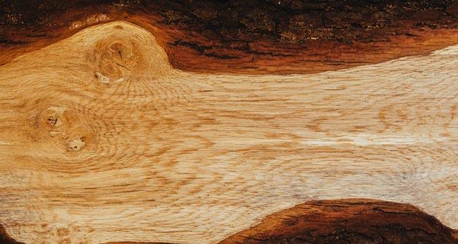 venatura del tronco