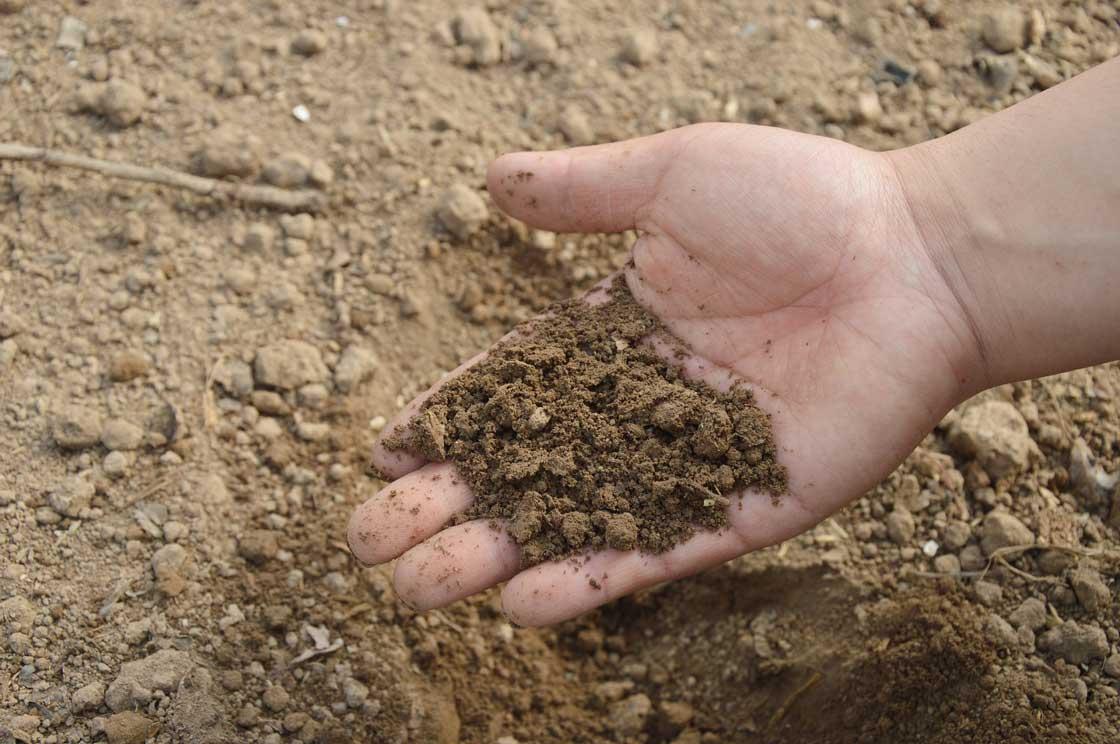 fertilizzante o compost